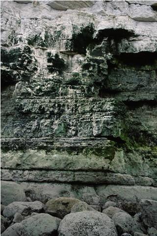 LR.FLR.CVOV.GCv Green algal films on upper and mid-shore cave walls and ceilings, Buckton Cliffs, Flamborough Head. Rohan Holt © JNCC