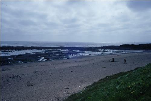 LS.LSA.MOSA.AmSco.Sco Scolelepis spp. in littoral mobile sand, Sand beach, Newbiggin Bay. Rohan Holt © JNCC