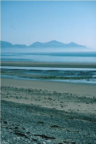 LS.LSA.MOSA.AmSco.Pon Pontocrates arenarius in littoral mobile sand, Dinas Dinlle, Trefor. Kate Northen © JNCC