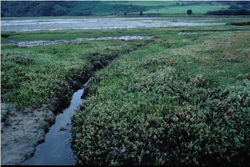 LS.LMU.UEST.Hed.Cvol Hediste diversicolor and Corophium volutator in littoral mud, Dulas Bay sands. Paul Brazier © JNCC