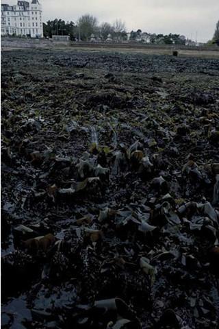 IR.LIR.K.Lsac.Ldig Laminaria saccharina and Laminaria digitata on sheltered sublittoral fringe rock, Devon/Cornwall?. Keith Hiscock © JNCC