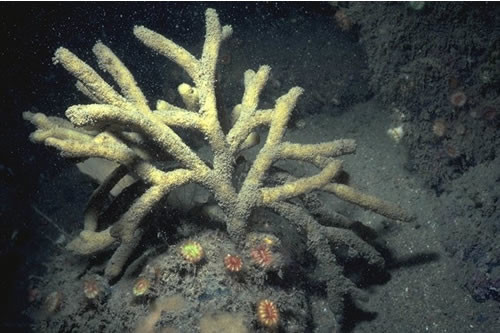 CR.HCR.XFA.ByErSp Bryozoan turf and erect sponges on tide-swept circalittoral rock, Sligneach Mor, Sunart. Rohan Holt © JNCC