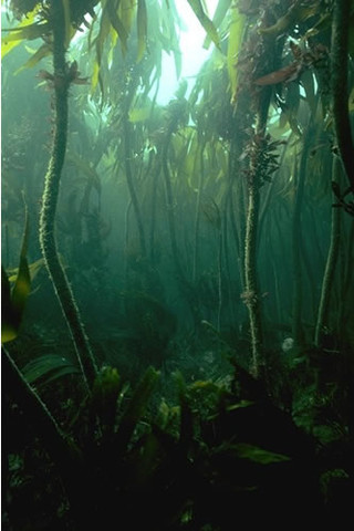 IR.MIR.KR.LhypT Laminaria hyperborea on tide-swept, infralittoral rock, Meikle Spiker, Dunbar. Paul Brazier © JNCC