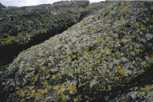 LR.FLR.LIC.YG Yellow and grey lichens on supralittoral rock, Millport. Kate Northen © JNCC
