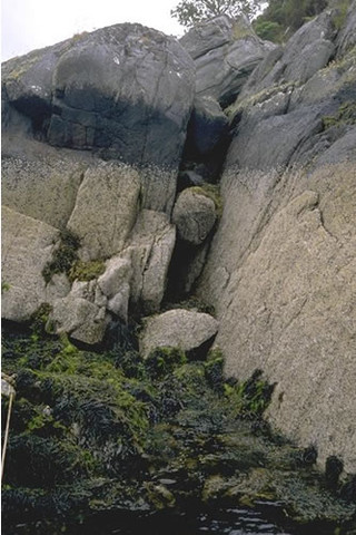 LR.FLR.LIC.Ver.Ver Verrucaria maura on very exposed to very sheltered upper littoral fringe rock, E shore, Eilean nan Eildean, Loch Sunart. Mark Davies © JNCC