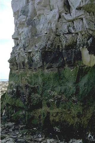 LR.FLR.CVOV.ChrHap Chrysophyceae and Haptophyceae on vertical upper littoral fringe soft rock, Thanet, Kent. Tim Hill © JNCC