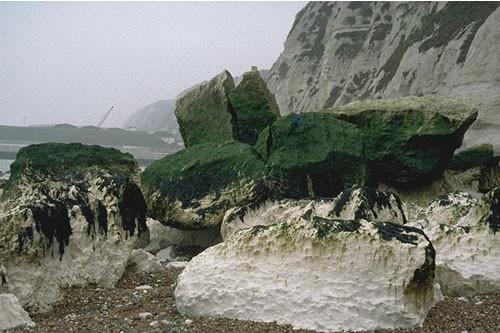 LR.FLR.EPH.EntPor Porphyra purpurea and Enteromorpha spp. on sand-scoured mid or lower eulittoral rock, Shakespeare Cliff, Dover. David George © JNCC