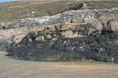 LR.FLR.EPH.EntPor Porphyra purpurea and Enteromorpha spp. on sand-scoured mid or lower eulittoral rock, Pentine Point East, Newquay. David Connor © JNCC