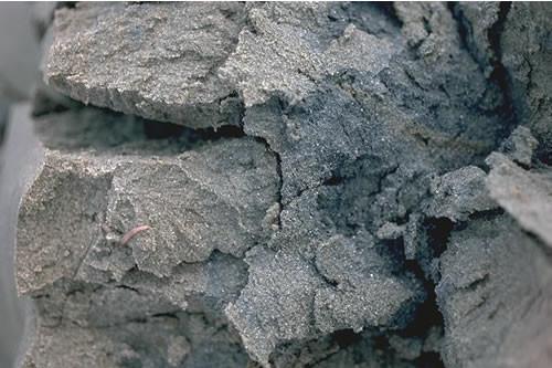 LS.LSA.FISA.Po Polychaetes in littoral fine sand, Craig-y-Penrhyn transect, Dyfi estuary. Ian Reach © JNCC