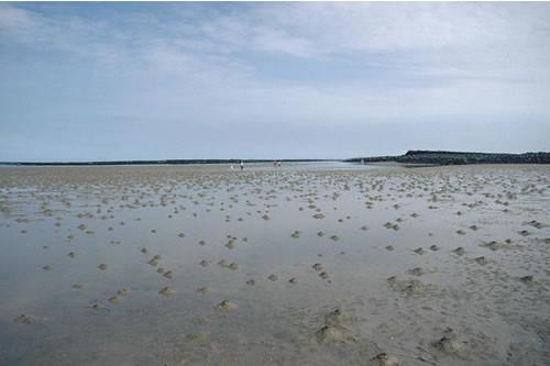 LS.LSA.FISA.Po Polychaetes in littoral fine sand, Emblestone, Newton. Eleanor Murray © JNCC