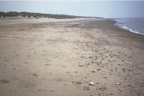 LS.LSA.MOSA.AmSco.Eur Eurydice pulchra in littoral mobile sand, Sea Palling, Norfolk. ANON © JNCC