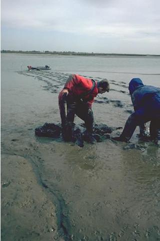 LS.LMU.UEST.Hed.Str Hediste diversicolor and Streblospio shrubsolii in littoral sandy mud, N shore of Skippers Island, Hamford Water. Colin McLeod © JNCC