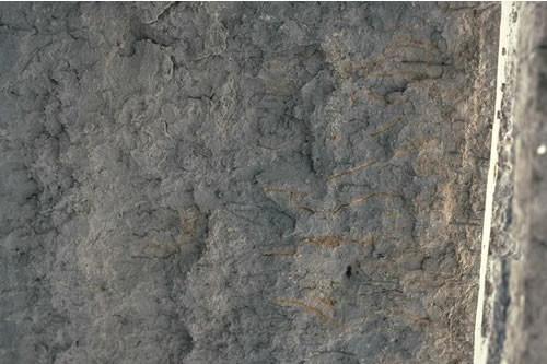 LS.LSA.MUSA.BatCare Bathyporeia pilosa and Corophium arenarium in littoral muddy sand, W Angerton, Duddon estuary. Dave Mills © JNCC