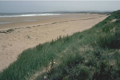 LS.LSA.ST.Tal Talitrids on the upper shore and strand-line, W Peffer Sands, North Berwick. Rohan Holt © JNCC