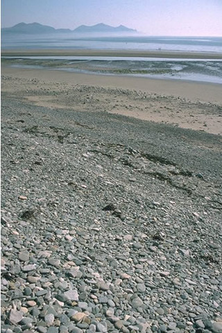LS.LCS.SH.BarSh Barren littoral shingle, Dinas Dinlle, Trefor, Gwynedd. Keith Hiscock © JNCC